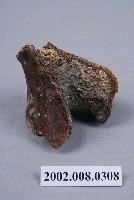 水牛髖骨化石